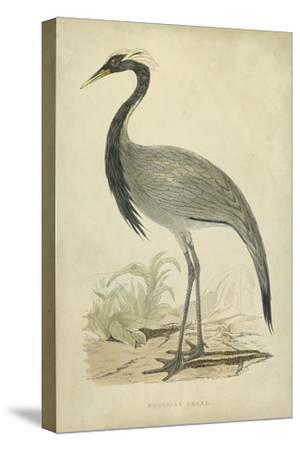 Morris Crane II--Stretched Canvas Print