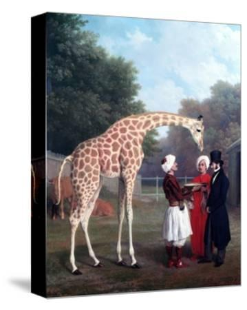 Nubian Giraffe-Jacques-Laurent Agasse-Stretched Canvas Print