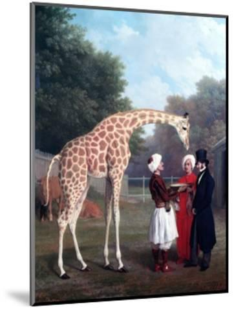 Nubian Giraffe-Jacques-Laurent Agasse-Mounted Premium Giclee Print