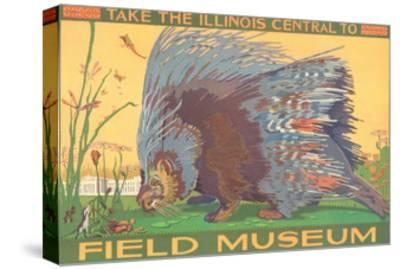 Poster for Field Museum with Porcupine--Stretched Canvas Print