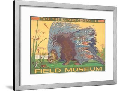 Poster for Field Museum with Porcupine--Framed Giclee Print
