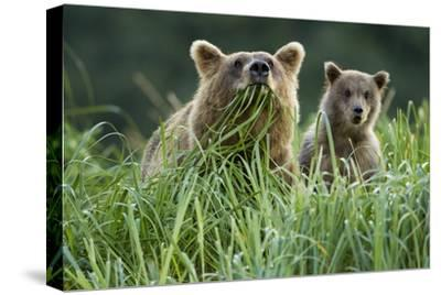 Brown Bear and Cub, Katmai National Park, Alaska-Paul Souders-Stretched Canvas Print