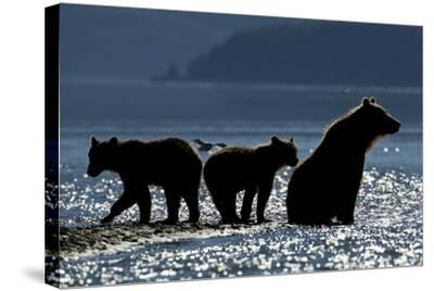 Brown Bear and Cubs, Katmai National Park, Alaska-Paul Souders-Stretched Canvas Print