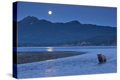 Brown Bear and Full Moon, Katmai National Park, Alaska-Paul Souders-Stretched Canvas Print