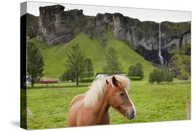 Icelandic Horse Near Waterfall-Paul Souders-Stretched Canvas Print