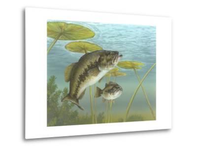 Largemouth Bass--Metal Print