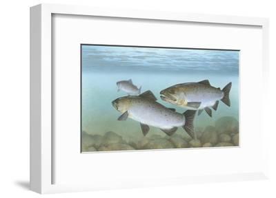 Pacific Salmon--Framed Giclee Print