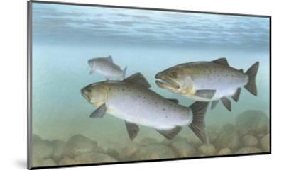 Pacific Salmon--Mounted Giclee Print
