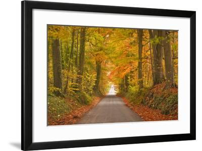 Autumn Colours in the Beech Trees on the Road to Turkdean in the Cotwolds-Julian Elliott-Framed Photographic Print
