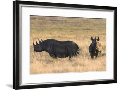 Black Rhinos (Diceros Bicornis), Lewa Wildlife Conservancy, Laikipia, Kenya, East Africa, Africa-Ann and Steve Toon-Framed Photographic Print