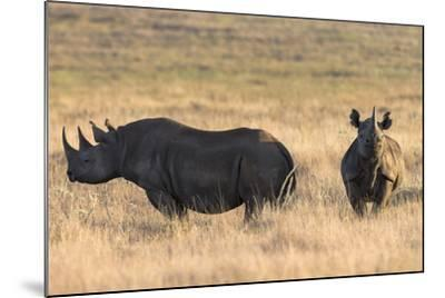 Black Rhinos (Diceros Bicornis), Lewa Wildlife Conservancy, Laikipia, Kenya, East Africa, Africa-Ann and Steve Toon-Mounted Photographic Print