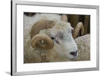 Dartmoor Sheep-James Emmerson-Framed Photographic Print