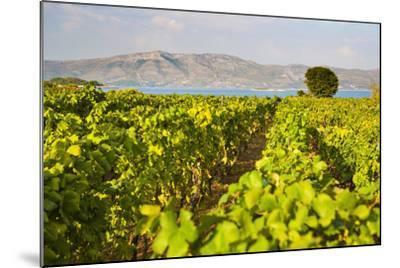 Vineyard, Lumbarda, Korcula Island, Dalmatian Coast, Adriatic, Croatia, Europe-Matthew Williams-Ellis-Mounted Photographic Print