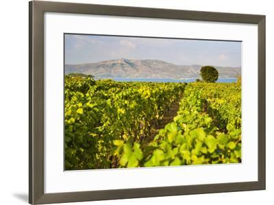 Vineyard, Lumbarda, Korcula Island, Dalmatian Coast, Adriatic, Croatia, Europe-Matthew Williams-Ellis-Framed Photographic Print