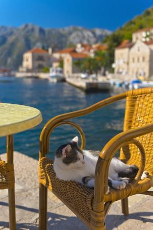 Waterside Cafe and Cat, Perast, Bay of Kotor, UNESCO World Heritage Site, Montenegro, Europe-Alan Copson-Framed Photographic Print