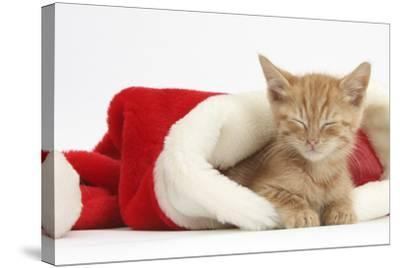Sleepy Ginger Kitten, 5 Weeks, in a Father Christmas Hat-Mark Taylor-Stretched Canvas Print