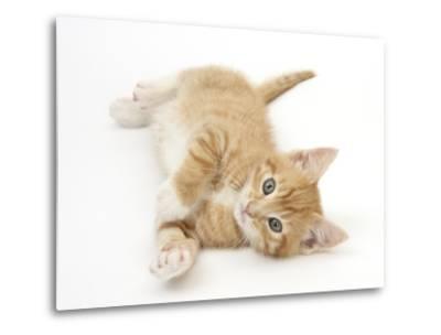 Ginger Kitten Rolling on His Back-Mark Taylor-Metal Print