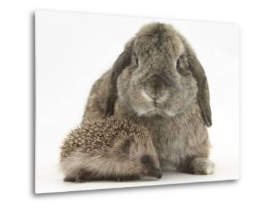 Baby Hedgehog and Agouti Lop Rabbit-Mark Taylor-Metal Print