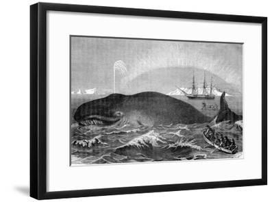 Illustration of Men Attacking Whale with Hand Harpoon--Framed Giclee Print