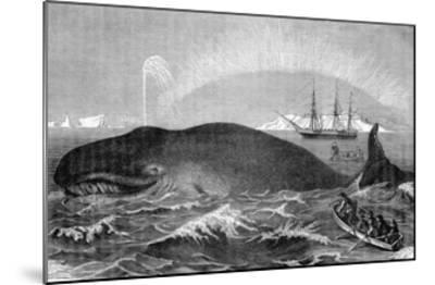 Illustration of Men Attacking Whale with Hand Harpoon--Mounted Giclee Print