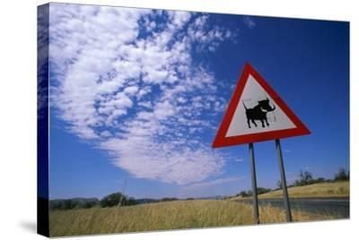 Warthog Crossing Sign-Paul Souders-Stretched Canvas Print