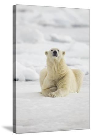 Polar Bear, Svalbard, Norway-Paul Souders-Stretched Canvas Print