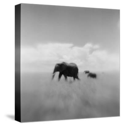 Elephant Herd, Masai Mara Game Reserve, Kenya-Paul Souders-Stretched Canvas Print