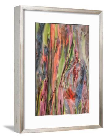 Rainbow Eucalyptus Detail, Hawaii-Vincent James-Framed Photographic Print