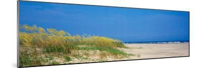 Sea Oat Grass on the Beach, Charleston, South Carolina, USA--Mounted Photographic Print