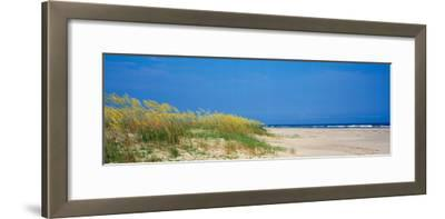 Sea Oat Grass on the Beach, Charleston, South Carolina, USA--Framed Photographic Print