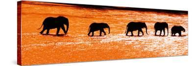 Herd of African Elephants (Loxodonta Africana) Crossing the River, Uaso Nyiro River--Stretched Canvas Print