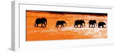 Herd of African Elephants (Loxodonta Africana) Crossing the River, Uaso Nyiro River--Framed Photographic Print