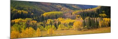 Aspen Trees in a Field, Telluride, San Miguel County, Colorado, USA--Mounted Photographic Print