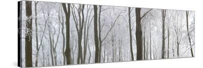 Snow Covered Trees in a Forest, Wotton, Gloucester, Gloucestershire, England--Stretched Canvas Print