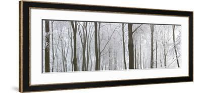 Snow Covered Trees in a Forest, Wotton, Gloucester, Gloucestershire, England--Framed Photographic Print