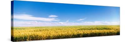 Farm Field Twin Falls Id USA--Stretched Canvas Print