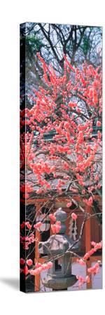 Kitano-Tenmangu Kyoto Japan--Stretched Canvas Print