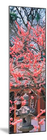 Kitano-Tenmangu Kyoto Japan--Mounted Premium Photographic Print