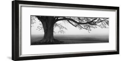 Tree in a Farm, Knox Farm State Park, East Aurora, New York State, USA--Framed Premium Photographic Print