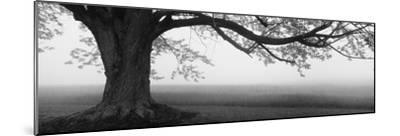 Tree in a Farm, Knox Farm State Park, East Aurora, New York State, USA--Mounted Premium Photographic Print
