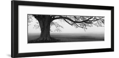Tree in a Farm, Knox Farm State Park, East Aurora, New York State, USA--Framed Photographic Print