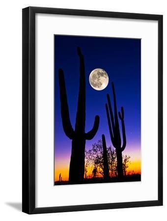 Moon over Saguaro Cactus (Carnegiea Gigantea), Tucson, Pima County, Arizona, USA--Framed Photographic Print