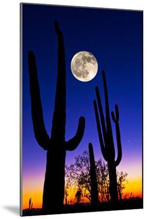 Moon over Saguaro Cactus (Carnegiea Gigantea), Tucson, Pima County, Arizona, USA--Mounted Photographic Print