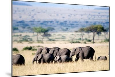 Herd of African Elephants (Loxodonta Africana) in Plains, Masai Mara National Reserve, Kenya--Mounted Photographic Print