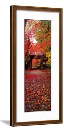(Komyoji Temple) Kyoto Japan--Framed Photographic Print