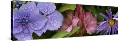 Close-Up of Flowers--Stretched Canvas Print