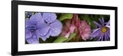 Close-Up of Flowers--Framed Photographic Print