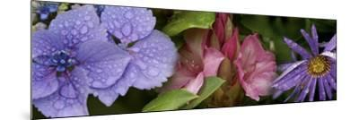 Close-Up of Flowers--Mounted Photographic Print