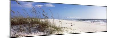 Tall Grass on the Beach, Perdido Key Area, Gulf Islands National Seashore, Pensacola, Florida, USA--Mounted Photographic Print