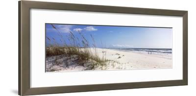 Tall Grass on the Beach, Perdido Key Area, Gulf Islands National Seashore, Pensacola, Florida, USA--Framed Photographic Print